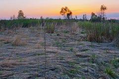日落春天领域 库存图片