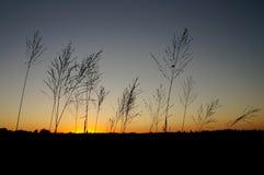 日落杂草 库存照片