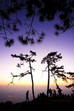 日落杉树和人风景与紫罗兰色天空的和sillouette  库存照片