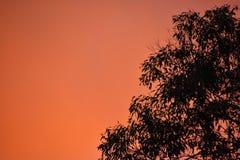 日落树 库存照片