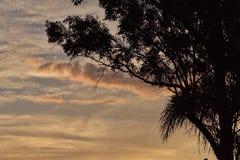 日落棕榈 免版税库存图片
