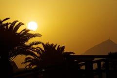 日落棕榈 库存照片