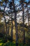 日落森林 免版税库存图片