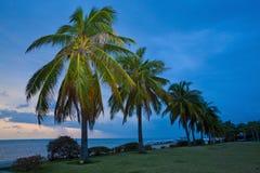 日落椰子树瓷海南 免版税图库摄影