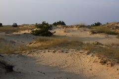 日落沙子风景、黄色沙漠、海滩与杉树和草 库存图片