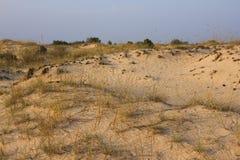 日落沙子风景、黄色沙漠、海滩与杉树和草 库存照片