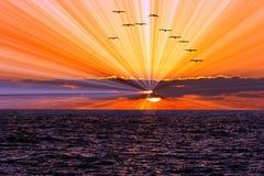 日落海洋鸟 库存图片