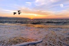 日落海洋鸟 免版税图库摄影