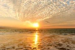 日落海洋鸟 图库摄影