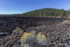 日落火山口国家历史文物的熔岩流森林 库存图片