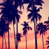 日落热带海岛可可椰子树假期概念 免版税库存照片