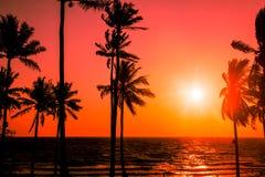 日落热带海滩 库存照片