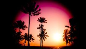日落热带海滩 库存图片