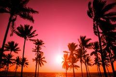 日落热带海滩 免版税图库摄影