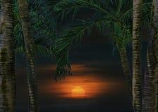 日落热带风景场面 库存图片