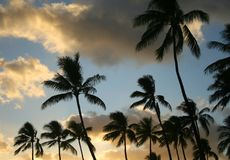 日落热带waikiki 库存照片