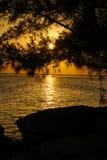 日落现出轮廓的结构树 免版税图库摄影