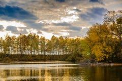 日落的一个森林湖 库存图片