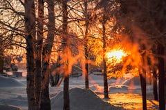 日落的冬天公园 分支树冰 图库摄影