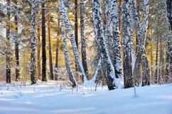 日落的冬天森林 库存照片