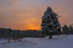 日落的冬天森林 免版税库存照片