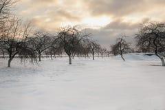 日落的冬天美丽的苹果树 库存照片