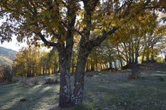 日落的图片与树的在光和阴影被赞赏的背景中 免版税库存图片