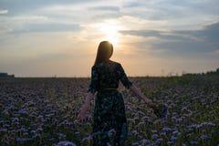 日落的妇女从后面的看法在与花束的花田在手中 库存图片