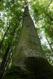 日落的山毛榉森林 免版税库存图片