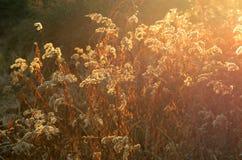 日落的干燥植物 库存照片