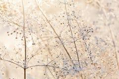 日落的干结冰的轻的植物 免版税库存照片
