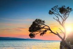 日落的庄严岩石海岛, Brela,马卡尔斯卡里维埃拉,达尔马提亚,克罗地亚 免版税图库摄影
