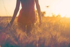 日落的性感的女孩在接触玉米的领域 库存图片