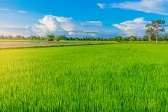 日落的抽象软的半焦点剪影与绿色水稻领域、美丽的天空和云彩的在Th的晚上 免版税库存图片