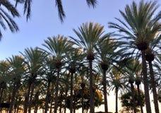 日落的棕榈树树丛 免版税库存图片