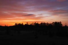 日落的森林 免版税库存图片