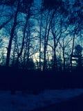 日落的森林 免版税库存照片