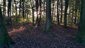 日落的森林 图库摄影