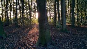 日落的森林 库存照片