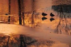 日落的池塘与鸟剪影。 库存图片