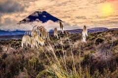 日落的汤加里罗山在新西兰 库存照片