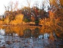 日落的沼泽沼泽地在冬天 免版税库存图片
