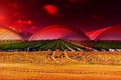 日落的温室 免版税库存照片