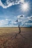 日落的澳大利亚在一个清楚的冬天` s晚上在北方领土, 库存图片