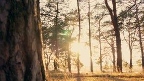 日落的秋天森林 影视素材