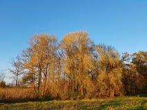 日落的秋季岸边的森林 库存照片
