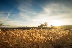 日落的美丽的植物草和花 库存图片