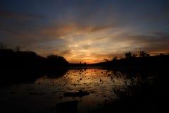 日落的美好的颜色作为太阳在树后退色 库存照片