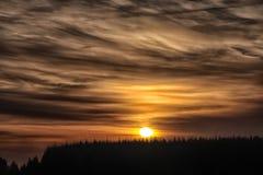日落的美好的风景在杉树的 免版税库存照片
