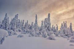 日落的美妙的积雪的森林 库存图片